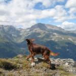 Jack in Val di Susa