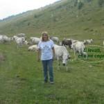 Giovannina e le mucche