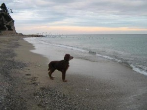Spack e il mare